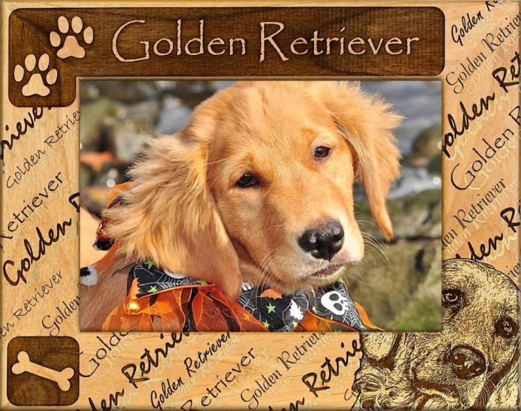 Dog Picture Frame - Golden Retriever - wooden photo frames
