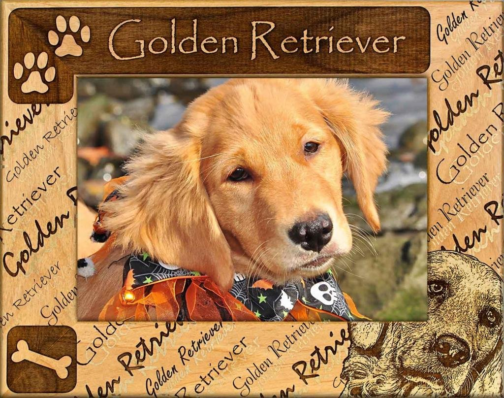 Dog Picture Frame - Golden Retriever - wooden photo frames