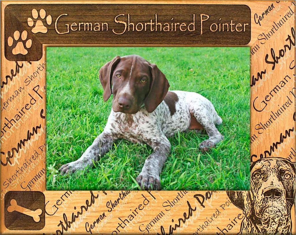 Dog Picture Frame - German Shorthaired Pointer - wooden photo frames